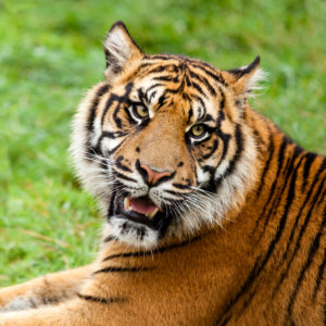 battle of the parenting styles authoritarian Mental toll of 'tiger parenting' share on reddit parenting styles authoritarian parenting: r igid, punitive battle hymn of the tiger mother, raised the.